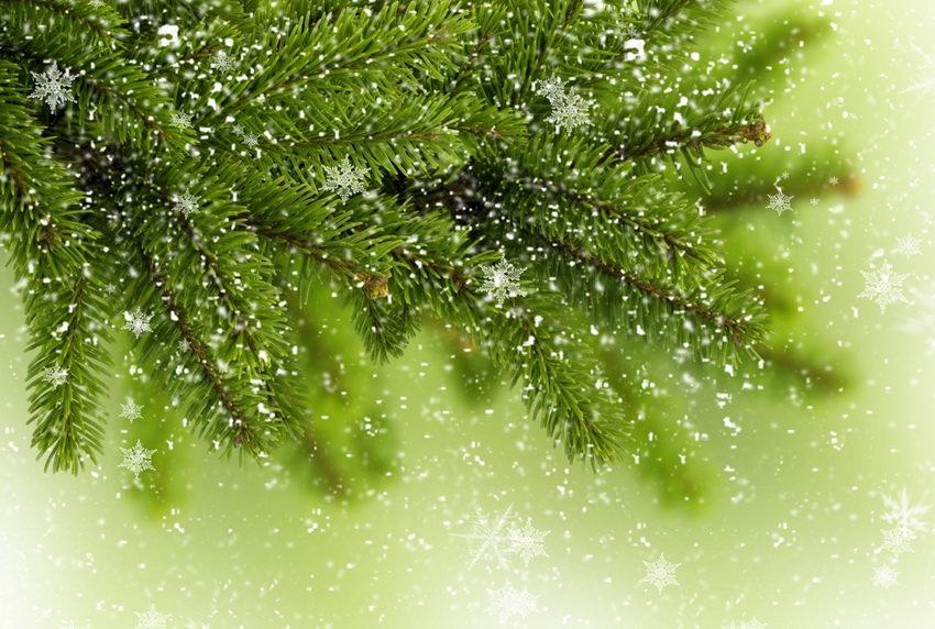 Какую елку выбрать на Новый год: живую или искусственную?