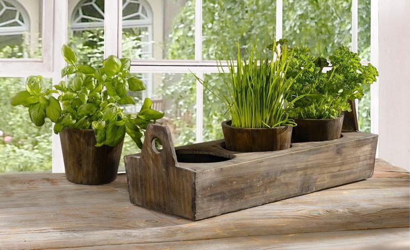 Как вырастить зелень в домашних условиях